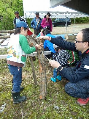 シイタケの原木作り-1