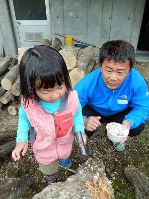 シイタケの原木作り-3
