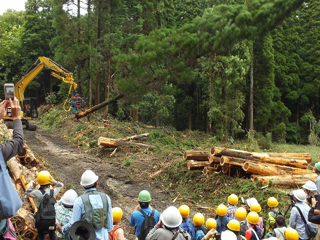 s-002伐採