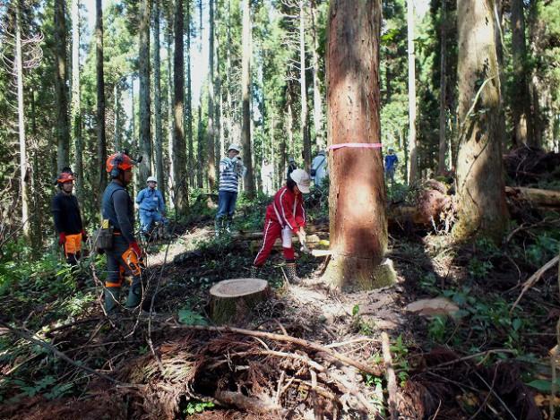 s-伐採体験1