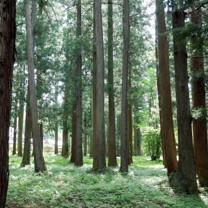 とやまの木で健康リフォーム