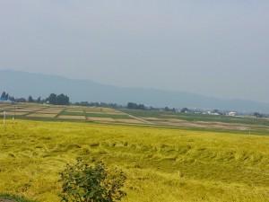 s-3田園風景