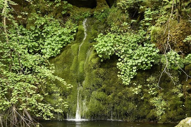 s-0844緑の滝?