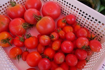 真っ赤に熟したトマト