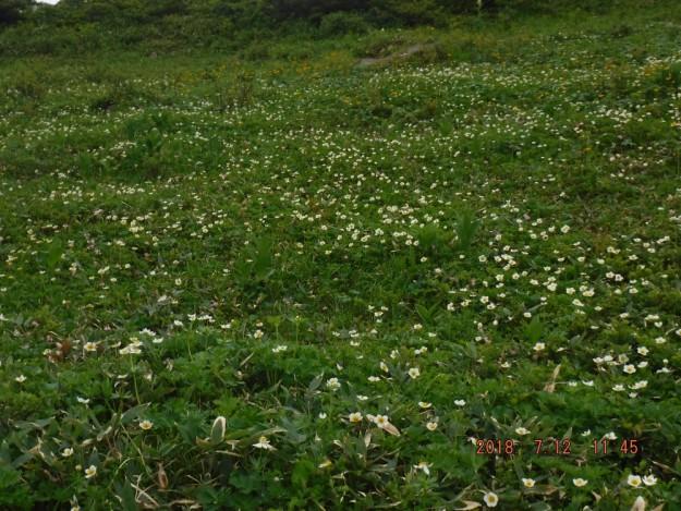 1145お花畑