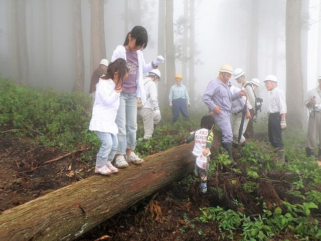 伐採木11