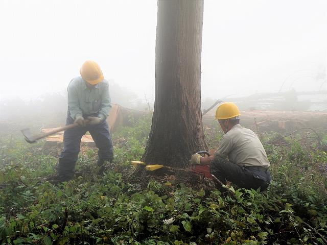 伐採1-11