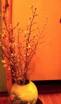啓扇桜-1