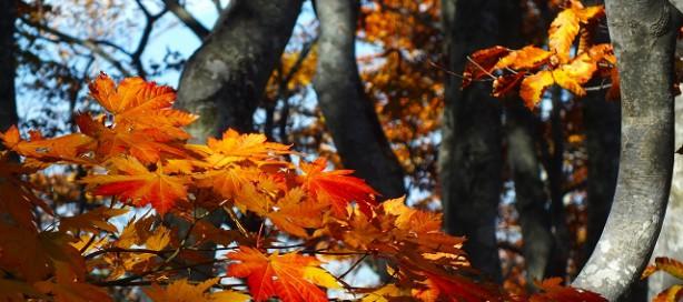 第41回近くの森林にふれよう! 10月18日(日)ゲストハウス木楽に集合