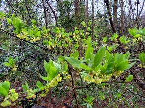 第42回森林にふれよう!4月29日(木)らんじょうの森でトレッキングを楽しもう!